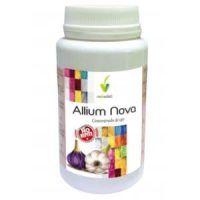 allium nova